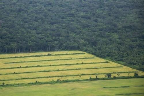 Le origini dei patogeni dell'agricoltura industriale