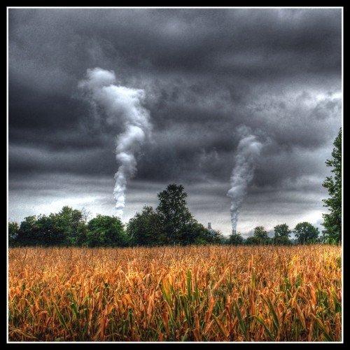 Cosa si nasconde dietro l'interesse di ENI per le foreste?